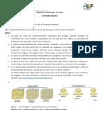 AP - Areias.docx