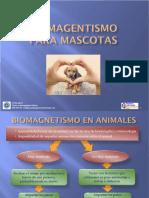 biomagnetismo en mascotas