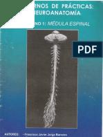 Cuaderno 1 - Mdula_espinal
