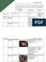 clasificacin mamferos