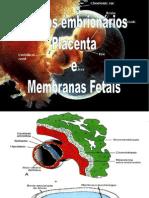 Anexos+embrionários2009