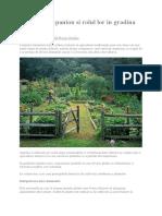 Plantele companion si rolul lor in gradina de legume