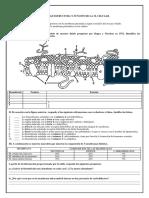 ACTIVIDADES-MEMBRANAS-INCLUYE-CORRECCION.docx