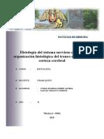 TRONCO ENCEFALICO Y CORTEZA CEREBRAL