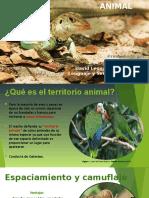 Territorio Animal.pptx