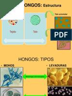 Estructuras de reproduccion Asexual de los hongos (1).pdf
