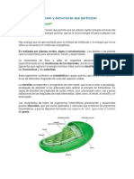 Fotosíntesis PARA CLASE