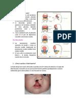 CUESTIONARIO-12-embrio