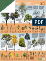 Árvores do Cerrado