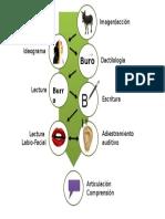 Comunicación Total Proximal- proceso.pptx