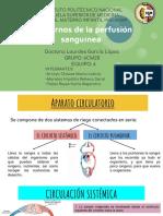 Trastornos de la perfusin sangunea.pdf