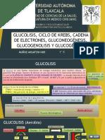 glucolisisciclodekrebscadenadeelectrones