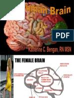 The Human Brain2