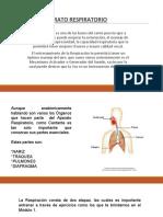 2.2. El aparato respiratorio