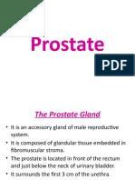 7 .Prostate