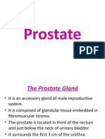 7 .Prostate.pptx