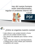pt_Interrelacion_de_los_sistemas