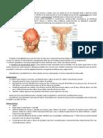 Cópia de CA-de-próstata-Ya