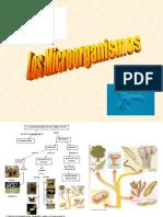microorganismos (1).pdf