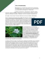 15_estramonio.pdf