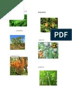flaura y flora del llano.docx