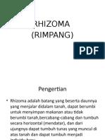 1. (Rhizoma) ngajar.pptx