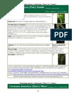 ficha dendrologica de 5 especies amazonicos