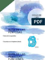 CICLO PENTOSAS.pptx