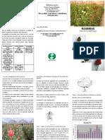 Roseiras.pdf