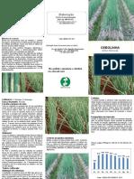 Cebolinhas.pdf