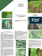 Couve folder pdff