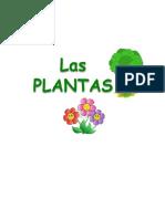 Las plantas son seres vivos y pertenecen al reino vegetal