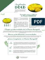 guia-de-cuidado-planta-marigold.pdf