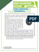 El-Sistema-Nervioso-Periférico-para-Tercero-de-Secundaria