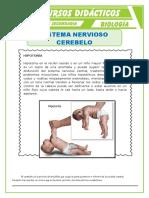 El-Cerebelo-para-Tercero-de-Secundaria (1)
