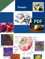 Biokim7_Protein_BuMaggy.pptx