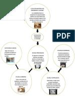infografía pensamiento contable