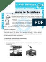 Ficha-Componentes-del-Ecosistema-para-Cuarto-de-Primaria