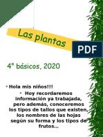 ppt plantas