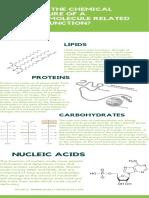 Macromolecule Infographic (1)