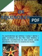 equinodermos FUNDAMENTAL.pptx