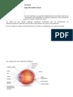 Anatomofisiologia Del Aparato Visual
