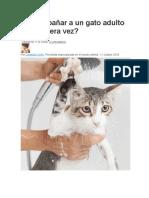 Cómo bañar a un gato adulto por primera vez.docx