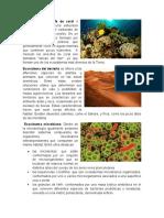 Ecosistema Arrecife de Coral