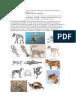 endoesqueleto y exoesqueleto de animales