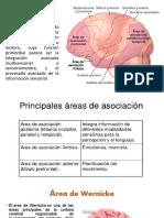 Áreas de asociación.pptx