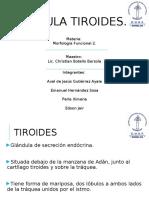 Tiroides Cuef Terminado