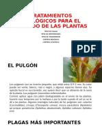 TRATAMIENTOS ECOLÓGICOS PARA EL CUIDADO DE LAS PLANTAS.pptx
