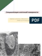Specializacija_kletochnoi_poverkhnosti