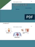 Sistemul circulator si digestiv